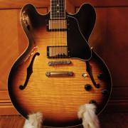 Cambio Gibson 335 Figured Sunburst