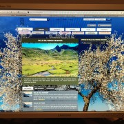 """Samsung SynMaster 203B  Lcd Monitor 20"""""""