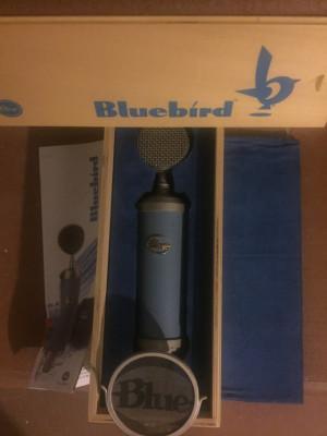 Blue bluebir