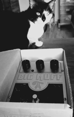 Llevate tu Big Muff